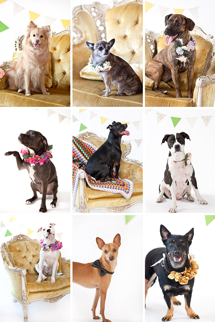 Foster To Adopt Dogs Nyc